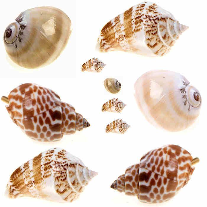seashell door knobs photo - 14
