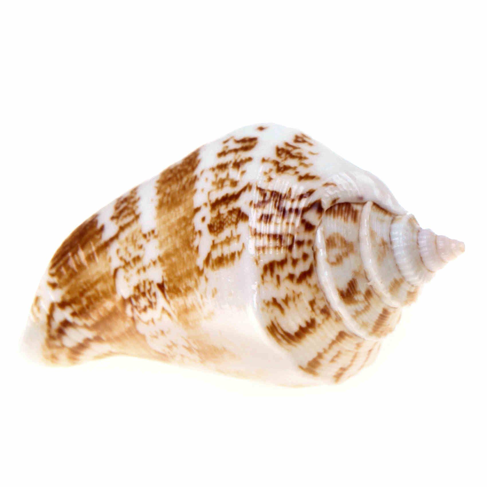 seashell door knobs photo - 2