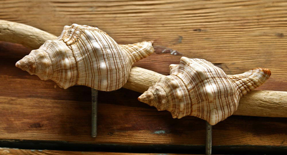 seashell door knobs photo - 6