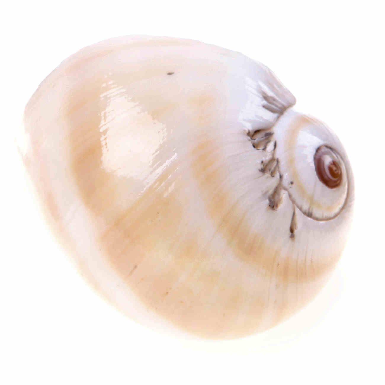 seashell door knobs photo - 9